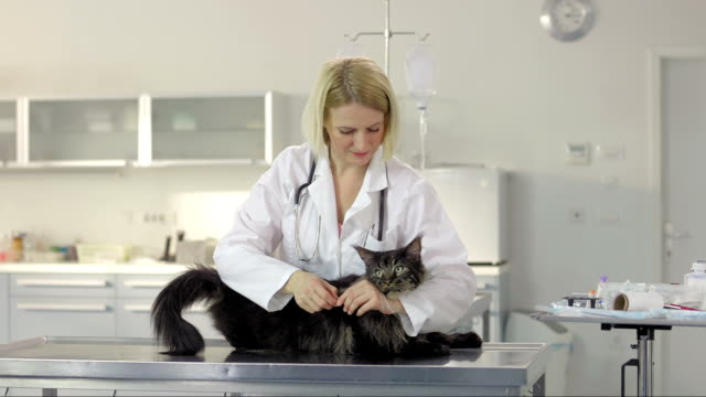 Veterinarian Giving A Shot Of The Vaccine