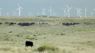 HD video cattle and wind farm National Grasslands Colorado