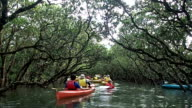 A video compilation shows unique indigenous animals mangrove forests coral shoals beaches festivals and rural and architectural features in the Amami...