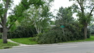 HD video Denver Colorado violent storm high winds topple trees