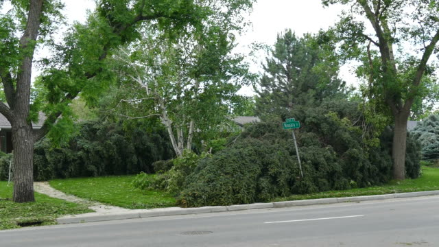HD video Denver Colorado violent storm high winds topple trees