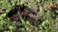 HD video flies feeding on dog droppings dung