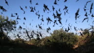 HD-video-mexikanische free-tailed bats, Texas