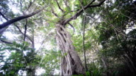 Video footage taken at the Amami Shizen Kansatsu no Mori nature preserve in Tatsugo located on AmamiOshima island of Kagoshima Prefecture shows some...