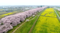 Video footage taken from a drone on April 8 Japan gives a bird's eye view of spring in full bloom at Gongendo Park in Satte Saitama Prefecture where...