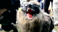 """Video footage taken in Kisarazu Chiba Prefecture shows a robotic """"super monster wolf"""" that members of the local agricultural cooperative have set up..."""