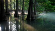 Video footage taken in Sasaguri Fukuoka Prefecture shows trees standing in a pond that has suddenly become a popular destination after word of its...