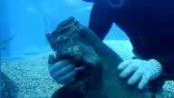 "Video footage taken midMay at Osaka Aquarium Kaiyukan shows a diver ""massaging"" a grouper as another fish circles and seems to impatiently await its..."