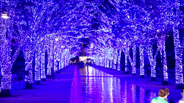 Video footage taken on the evening of November 21Japan in the busy Tokyo district of Shibuya shows rows of zelkova trees strung with blue LED lights...
