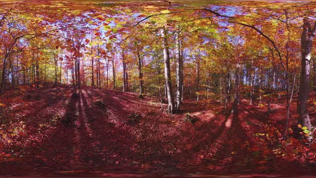 360VR Video in 4K colorful autumn forest