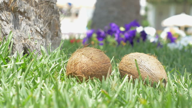 Video of coconuts on the grass pack shot in 4K