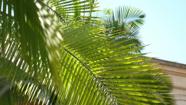 Video of palm tree in 4K