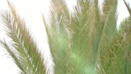 Video of palm tree in 4K