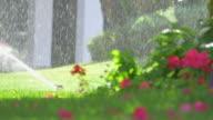 Video van de sprinkler in de tuin in 4K