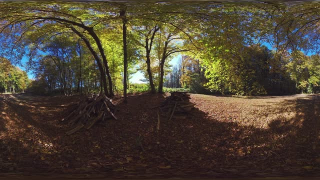 360VR Video of wood pile in autumn forest