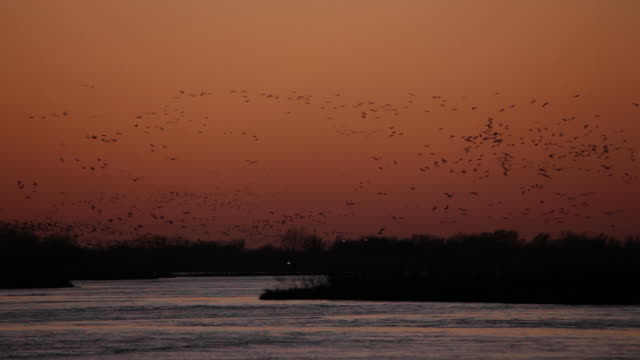 HD video Platte River sunset over thousands sandhill cranes Nebraska