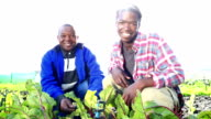 Video portrait of African Organic Farmers high five