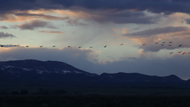 HD video Sandhill Cranes fly past Colorado mountain sunset