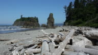 HD video Sea stacks and shoreline Olympic National Park
