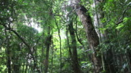 HD video thick rainforest of Nosy Mangabe Island Reserve Madagascar