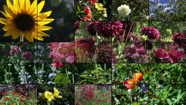 Video Wall: Flowers