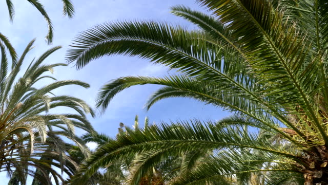 Videos of palm tree in 4K in real slow motion