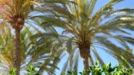 Videos of palm tree in 4K