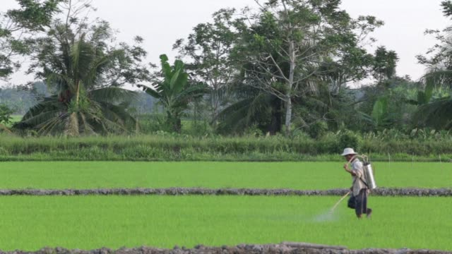Vietnam's drive to become the world's leading rice exporter is pushing farmers in the fertile Mekong Delta to the brink say experts with mounting...