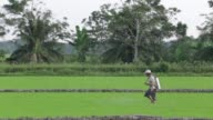 Vietnams drive to become the worlds leading rice exporter is pushing farmers in the fertile Mekong Delta to the brink say experts with mounting costs...