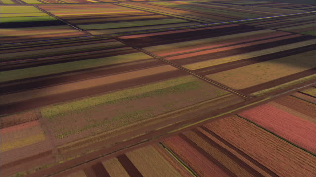 AERIAL WS View above fields of multi-colored crops / Lakeland, Florida, USA