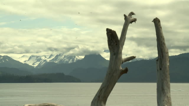 'View across Kachemak Bay from near Homer, Kenai Peninsula, Alaska, looking towards Kachemak Bay State Park and Wilderness Park, with snow topped mountain range, driftwood in foreground, small boat passes right to left, seabirds in air.'