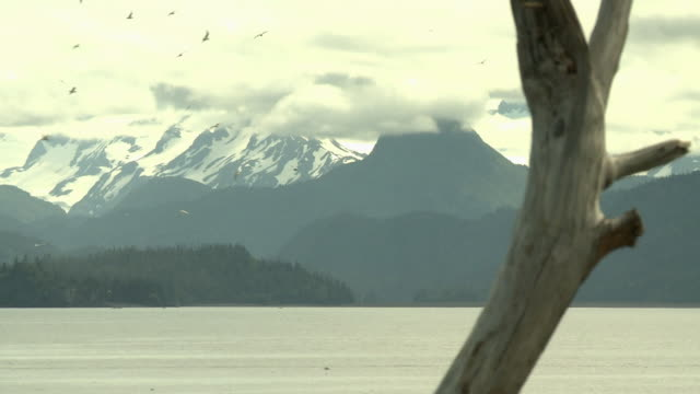 'View across Kachemak Bay from near Homer, Kenai Peninsula, Alaska, looking towards Kachemak Bay State Park and Wilderness Park, with snow topped mountain range, driftwood in foreground, focus pulls from mountains to wood and back.'
