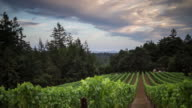 View Between Rows in California Winery - Time Lapse