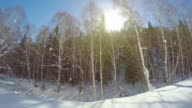 POV View from a car of forest after snow/Xinjiang,China.