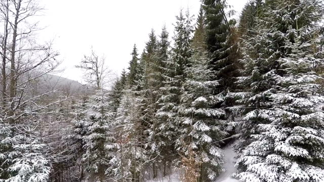 View from the ski lift. Winter forest and ski trail with skiers.
