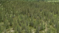 MS AERIAL View low over forests in Brooks river area / Alaska, United States