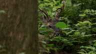 View of a deer in Sihumrim (Famous forest in Jeju Island)