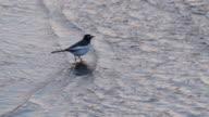 View of a Herring Gull in Goseonggun