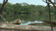 View of a typical amazon landscape - TILT CAM