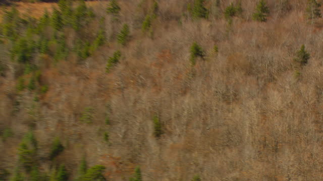 WS AERIAL PAN View of autumn color trees at Green Mountain Nat Forest / Vermont, United States