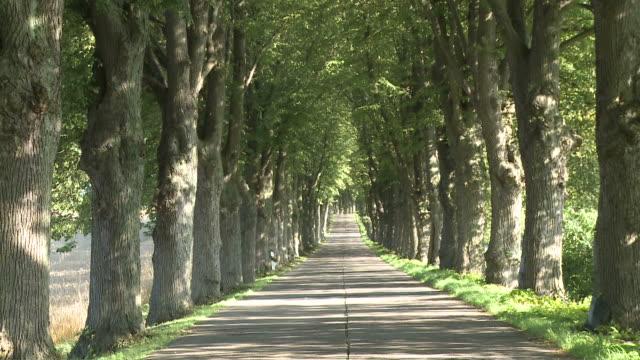 WS ZI View of avenue / Krummin/Usedom,  Mecklenburg Western Pomerania, Germany