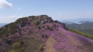 View of Azalea flowers covered Daegeumsan Mountain