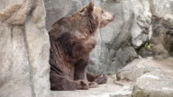 View of bear in Gwacheon Seoul Grandpark