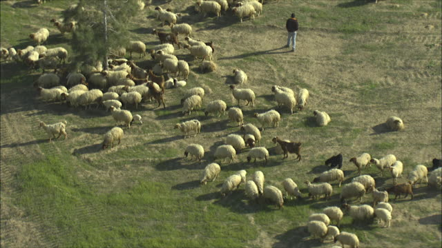 WS ZO AERIAL View of Bedouin herding sheep / Negev, Israel