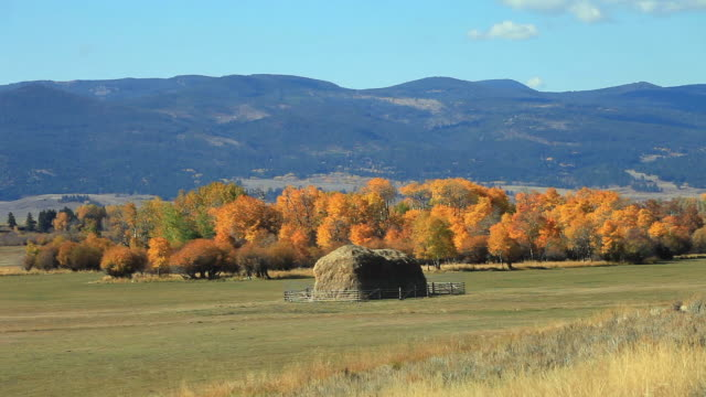WS View of Bread loaf shaped hay stack in field with golden trees and moputains in background / Ovando, Montana, United States