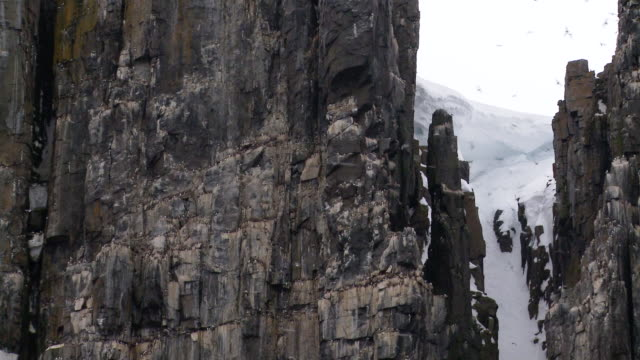 WS PAN View of Brunnich Guillemots nesting on cliffs of Cape Fanshaw / Hinlopen Strait, Svalbard, Norway