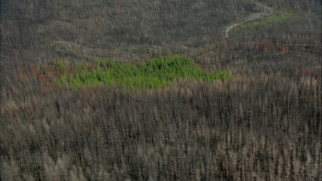 AERIAL View of burnt forest with small patch of green trees that survived fire / Marion, Montana, USA