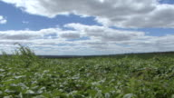 WS View of cafe and beans plantation at farm / Goias, Brazil