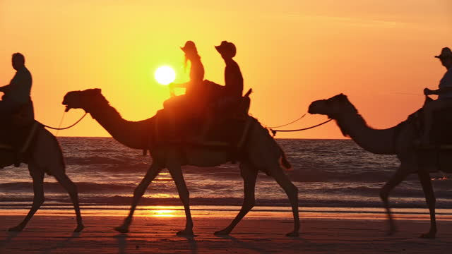 WS View of camel ride at sunset time / Broome, Western Australia, Australia