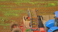 WS AERIAL TS View of carrot harvesting / Adelaide, South Australia, Australia
